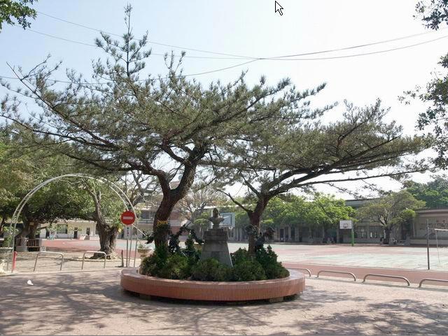 其树形优美为常绿大乔木,树冠幼时成圆锥形,老时为扁平伞状,树皮黑色