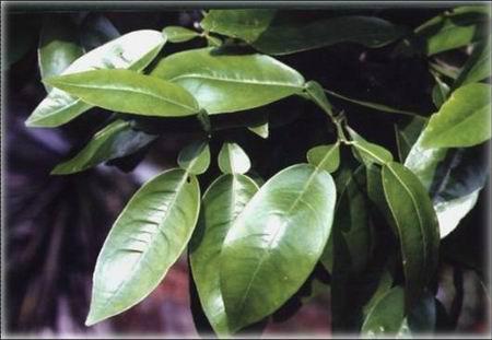 柚子树-嗡嗡营培训心得 今天认识了哪些动植物呢