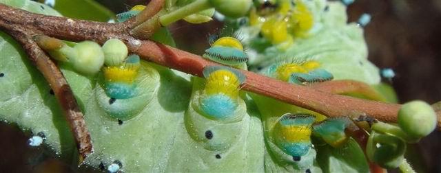 幼儿树枝手工动物作品图片大全