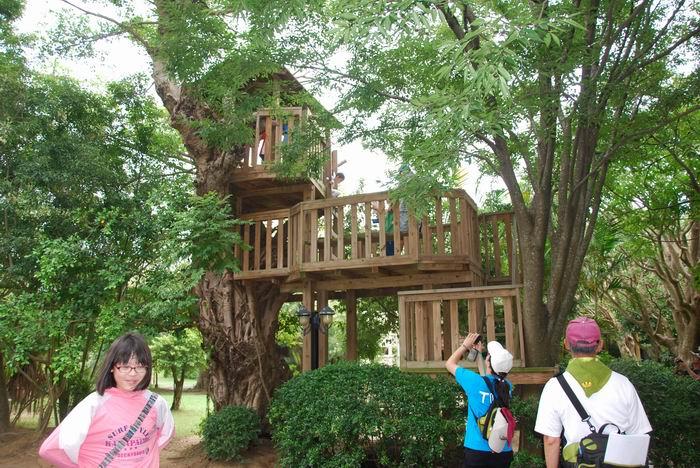 家长带著小朋友爬上树屋,体验一下老榕树不同的风貌.