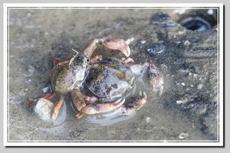 树叶小制作螃蟹