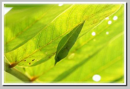 树叶画蝴蝶蜻蜓