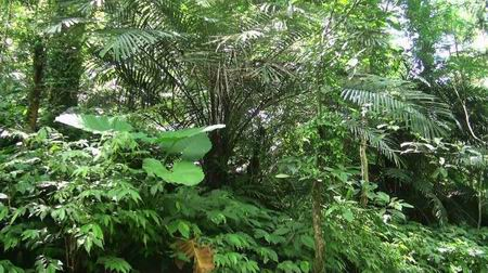 蚂蚁森林长成大树照片