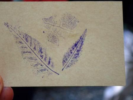 把拓印成果作成叶拓书签      每组选10片刚刚沿路捡拾的树叶,各派