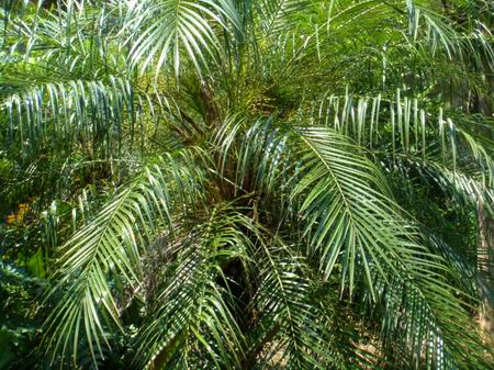 荒岛求生椰子树